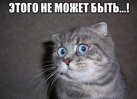 kote-v-shoke_64306002_orig_